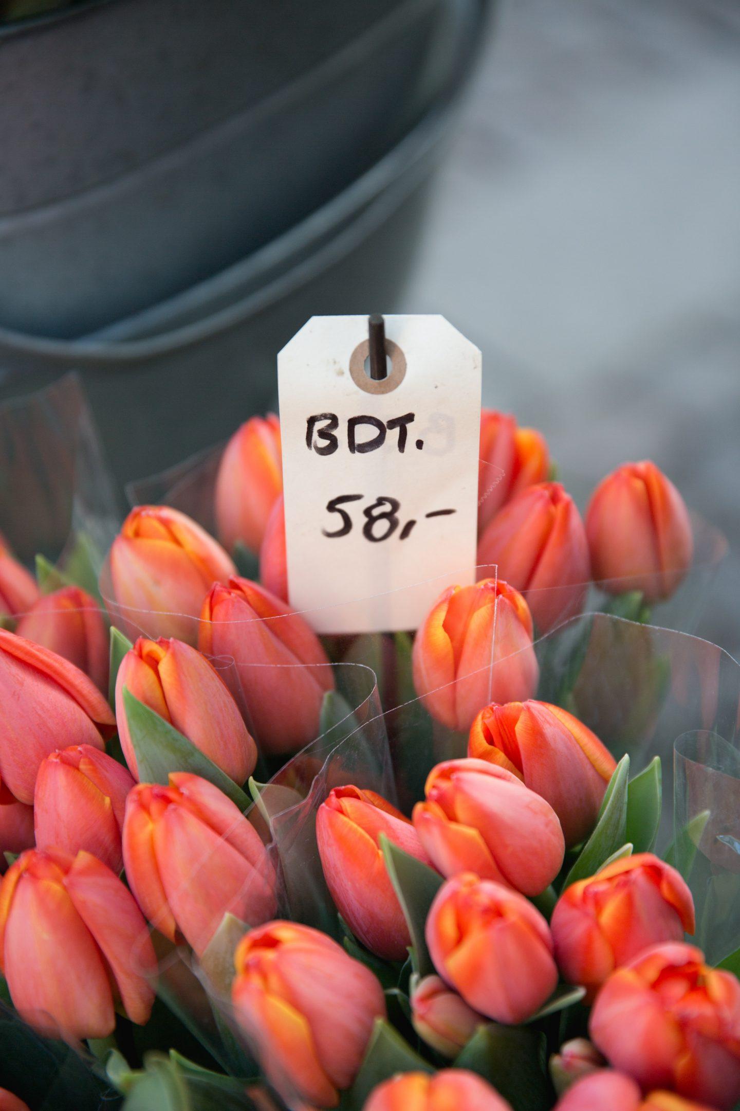 tulips-quarantine-flower-gardening